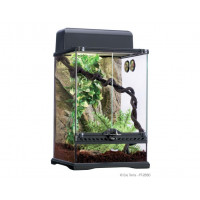 Kit terrario tropical