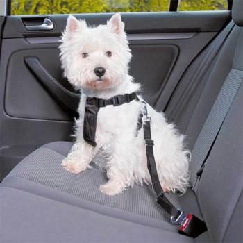Arnés de seguridad para coche